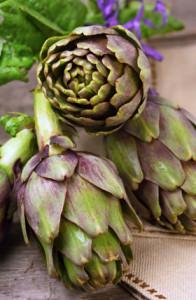 Die Knospen einer Artischockenpflanze